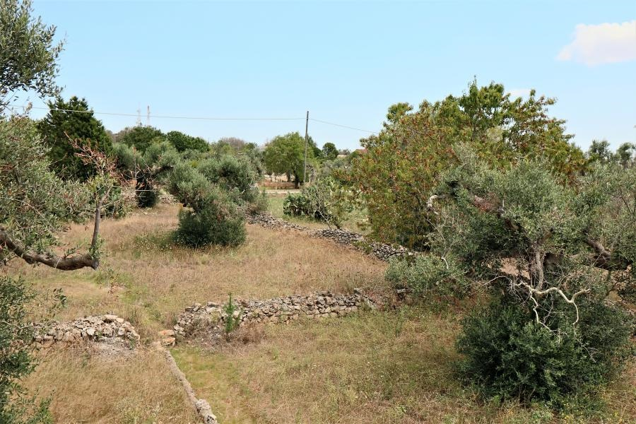 Sale Agricultural land with ruin or casotto Parabita