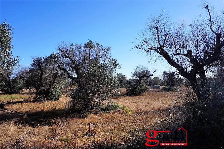 Vendita terreno agricolo con rudere o casotto melissano - Diritto di passaggio su terreno agricolo ...