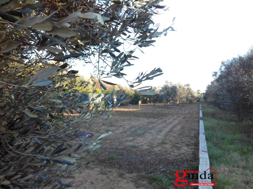 Vendita terreno agricolo matino terreno agricolo in for Vendita alberi da frutto adulti