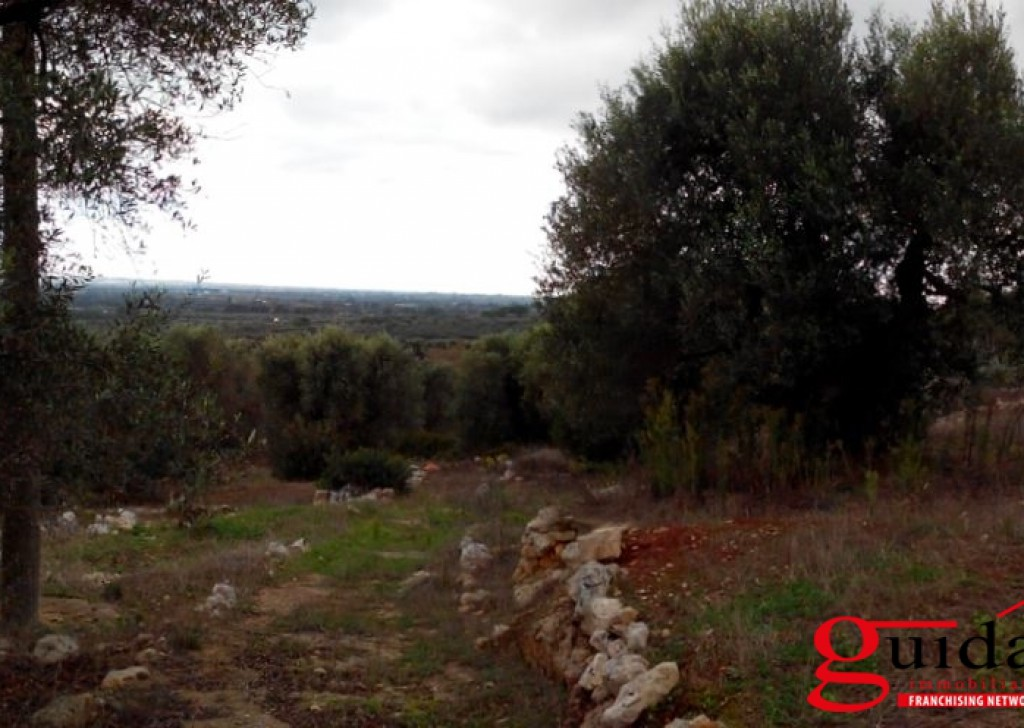For Sale Agricultural land Ruffano -  Land-agriculture-for-sale-in-Casarano-and-Taurisano-in-area-overview-and-with-trees-of-olive Locality
