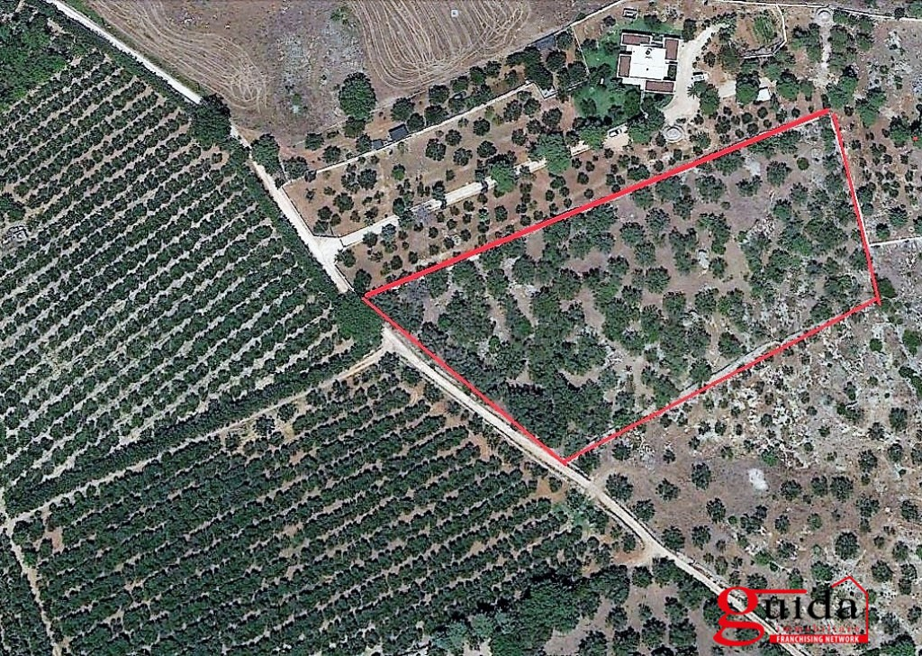 For Sale Agricultural land Sannicola -  Land-agriculture-for-sale-in-Chiesanuova-Sannicola-a-few-km-from-center-town-and-the-Sea Locality