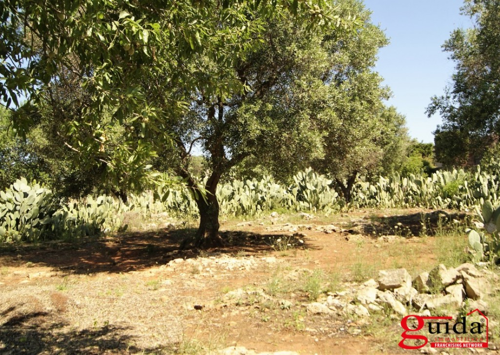 For Sale Building land Matino -  Land-building-in-sales-a-Matino-area-residential-and-scenic Locality