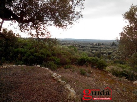 Land-agriculture-for-sale-in-Casarano-and-Taurisano-in-area-overview-and-with-trees-of-olive