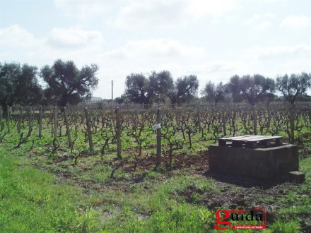 Land-agriculture-for-sale-in-Matino-with-trees-in-olive-and-well-wellspring