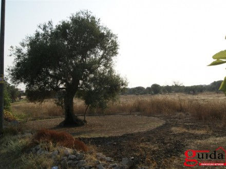 Land-agriculture-for-sale-in-Matino-in-first-edge-of-center-town-and-with-option-to-build