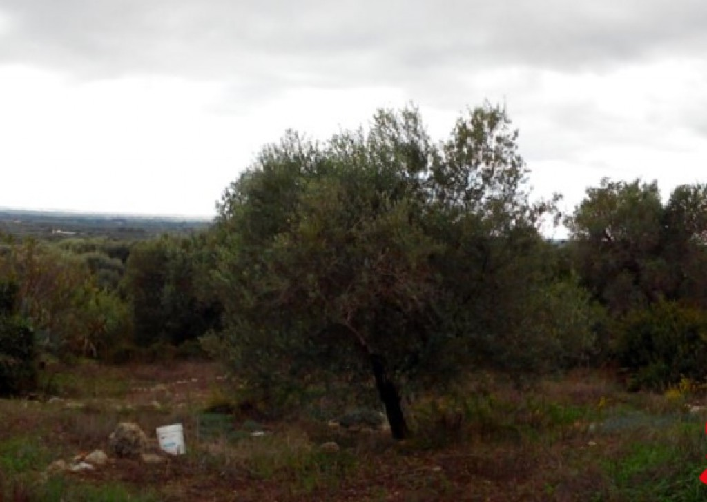 Sale Agricultural land Ruffano -  Land-agriculture-for-sale-in-Casarano-and-Taurisano-in-area-overview-and-with-trees-of-olive Locality