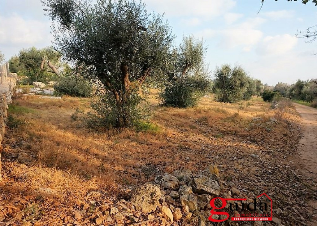 Sale Agricultural land Sannicola -  Land-agriculture-for-sale-in-Chiesanuova-Sannicola-a-few-km-from-center-town-and-the-Sea Locality