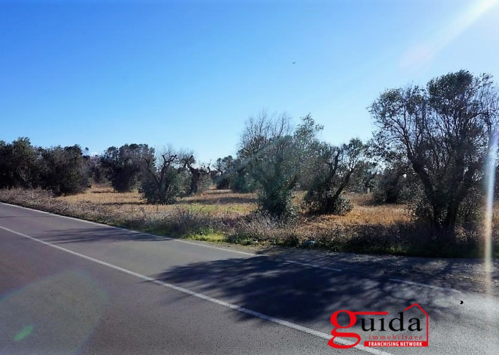 Sale Agricultural land with ruin or casotto  Melissano - Land-agriculture-for-sale-in-agro-of Melissano-on-road-to-Casarano-a-Taviano-with-ruin Locality