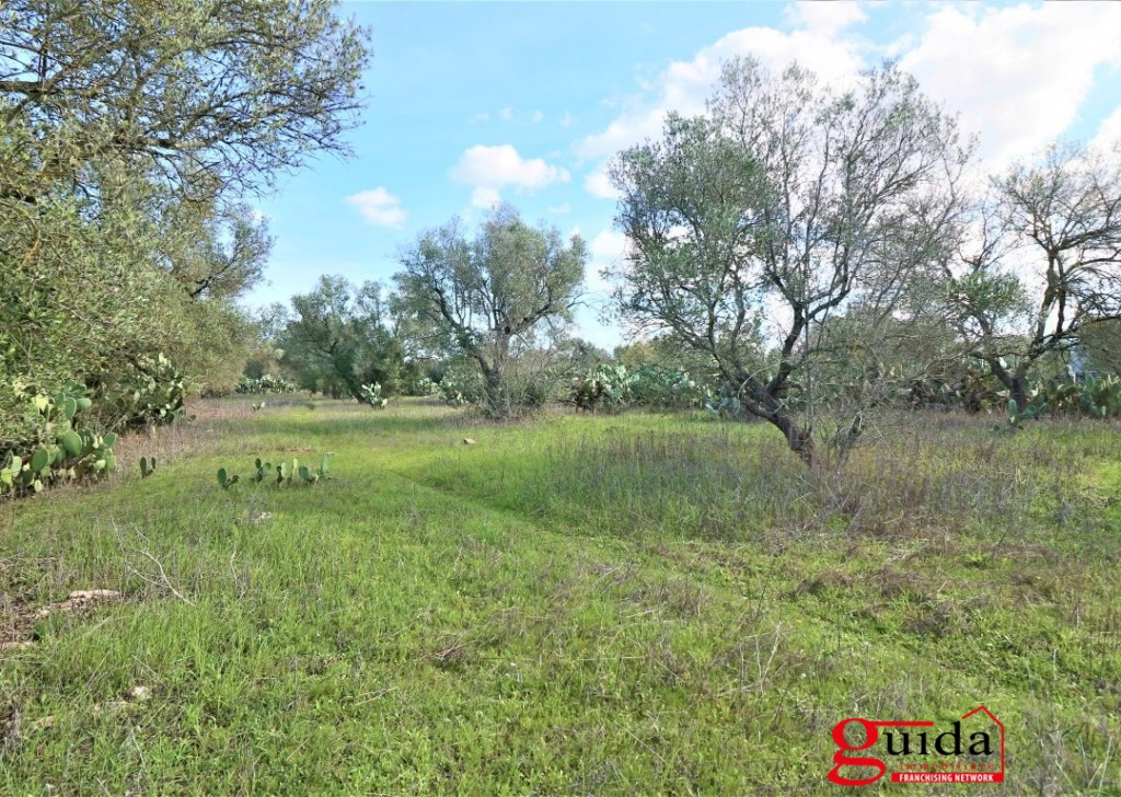 Sale Agricultural land Matino - Land-of-7000-Sq-in-buy-in-zone-overview-a-Matino-Salento-TA02 Locality