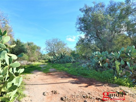 Land-of-7000-Sq-in-buy-in-zone-overview-a-Matino-Salento-TA02