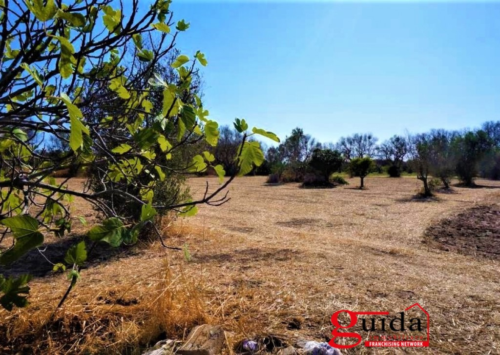 Sale Agricultural land Matino - Farm land for sale in Matino with two spring wells Locality
