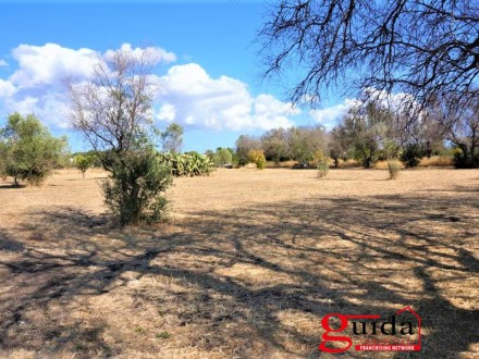 Farm land for sale in Matino with two spring wells