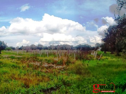Land-agriculture-for-sale-in-Matino-with-vineyard