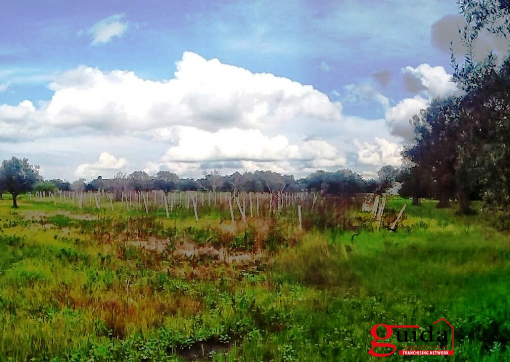 Sale Agricultural land Matino - Land-agriculture-for-sale-in-Matino-with-vineyard Locality