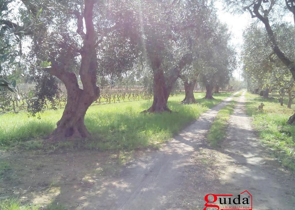 Sale Agricultural land Matino - Land-agriculture-for-sale-in-Matino-with-trees-in-olive-and-well-wellspring Locality