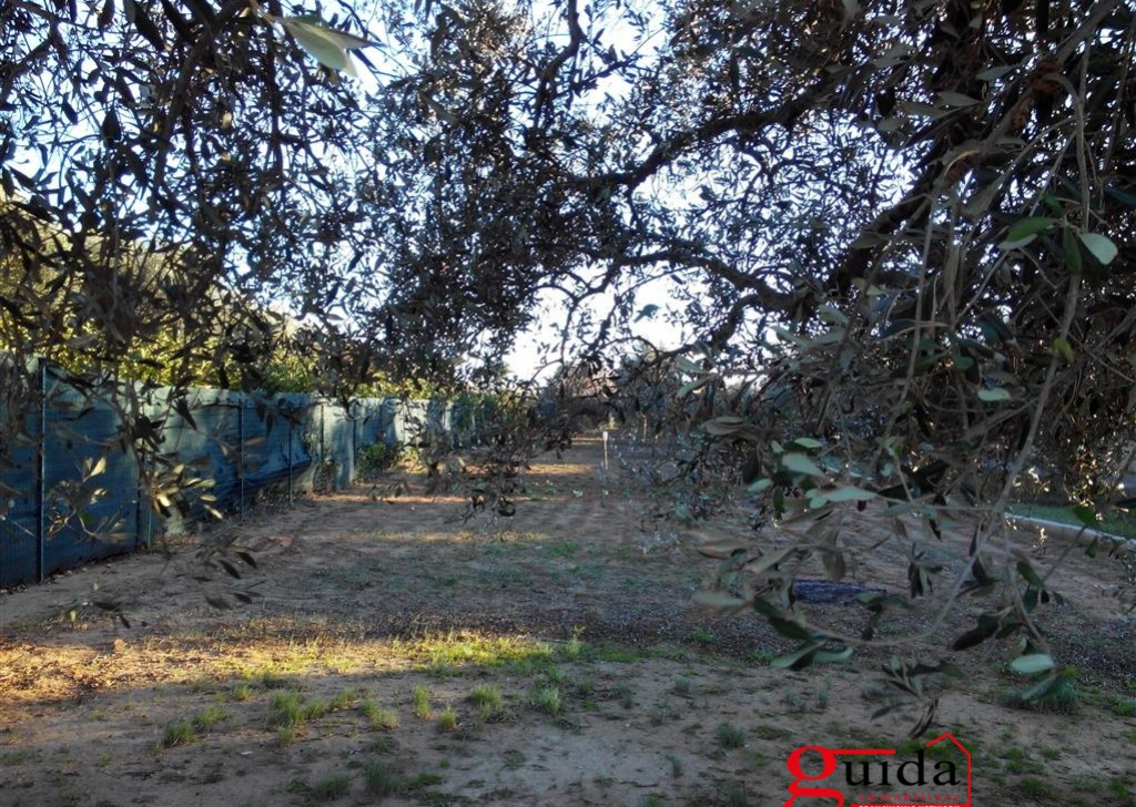 Sale Agricultural land Matino -  Land-agriculture-for-sale-in-Matino-with-trees-in-olive-and-by-result Locality