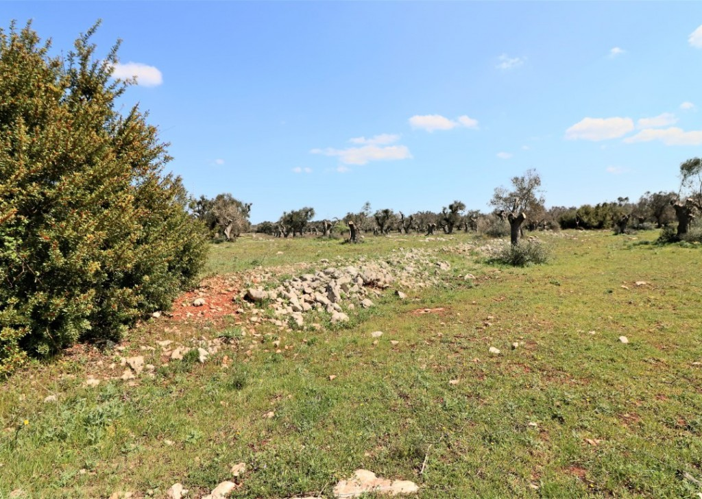 Sale Agricultural land Ruffano - Building plot of astronomical Park San Lorenzo  Locality
