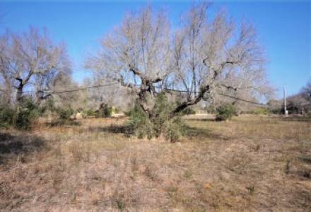 Agricultural land for sale in Gallipoli about three km from the sea